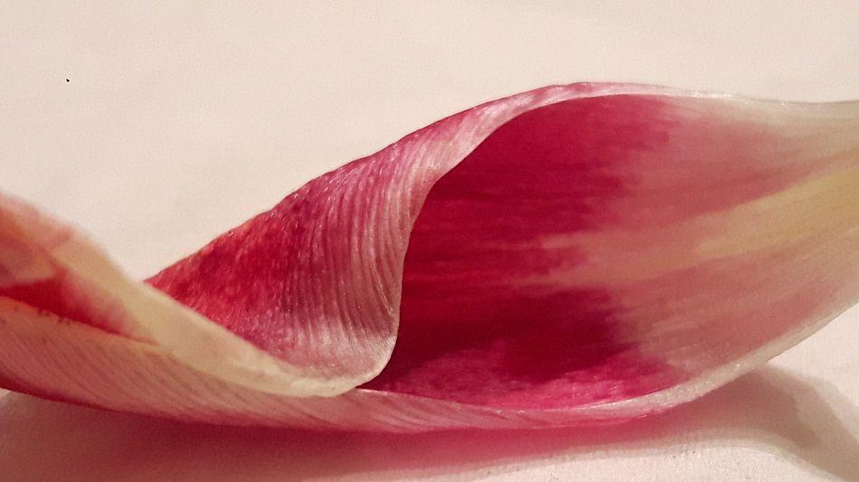 Tulpenblad van Gerhilde Mulder