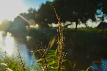 Pflanzen entlang der Uferpromenade mit Sonnenstrahlen von Thom Vermeulen