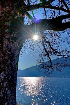 Sonne küsst Baum von Roith Fotografie