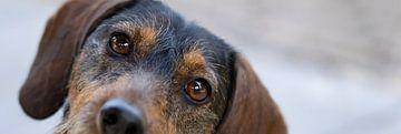 Zie de sterretjes in mijn trouwe hondenogen. van Gert J ter Horst