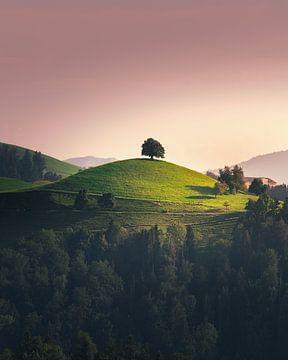 Baum auf Berg. von Nick de Jonge - Skeyes
