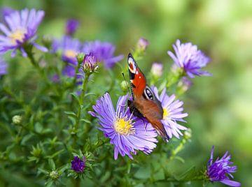 Schmetterling von BVpix