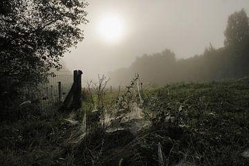 Mist, zon, dauw von