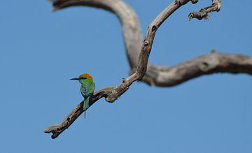 Farbiger Vogel auf Baumast von Ingrid Bargeman