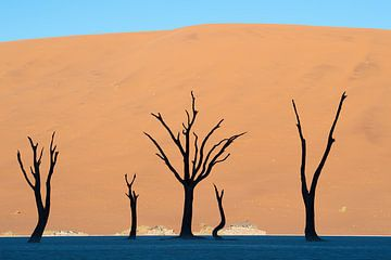 Die Landschaft von Deadvlei am Morgen von Jos van Bommel