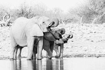 Elefanten am Wasserloch in Schwarz und Weiß   Namibia, Etosha National Park von Suzanne Spijkers