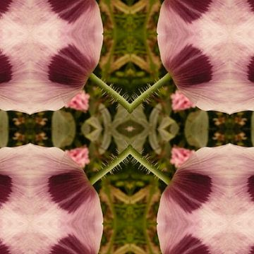 bloem 30 van Margriet Snaterse