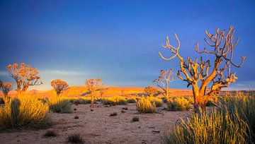 Het eerste zonlicht op de vegetatie in de Kalahariwoestijn, Namibië van Rietje Bulthuis