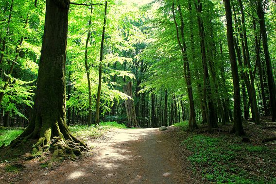 Im Frühlingswald van Ostsee Bilder