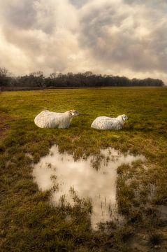 Schafe von Hannie Kassenaar