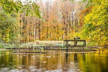 Teich mit rostigen Installationen in einem Herbstwald