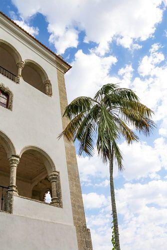 Palmboom in Sintra Lissabon