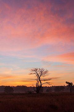 Sonnenaufgang von ton vogels