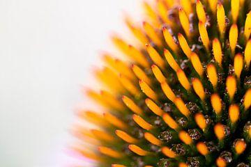 Der Kern einer Sonnenblumenblüte vor dem hellen Licht. von Joeri Mostmans