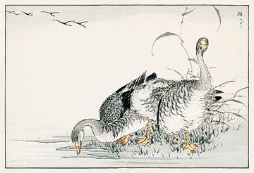 Weiße Gans Illustration von Numata Kashu von Studio POPPY