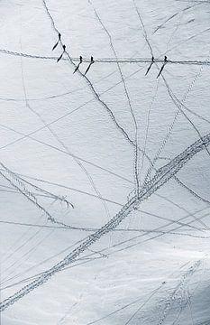 Traces dans la neige sur Menno Boermans