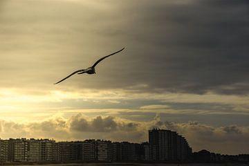 Meeuw, zee, kust von Stef De Vos