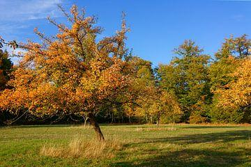 Autumnal Grassland-Orchard van Gisela Scheffbuch
