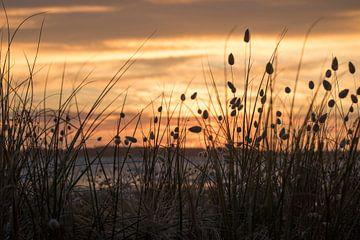 Konijnestaartjes bij zonsopkomst van Michaelangelo Pix
