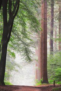 Ochtend licht in het bos