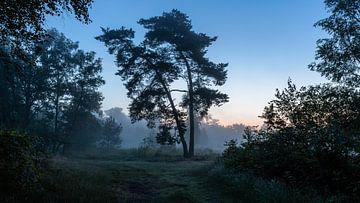 Misty Twilight Silhouette Trees van
