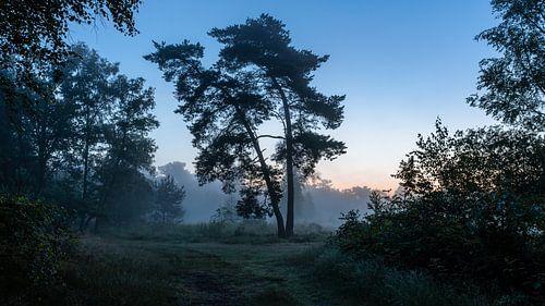 Misty Twilight Silhouette Trees van William Mevissen