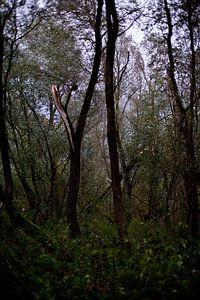 Baum nach dem Sturm