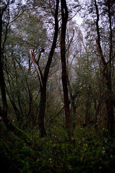 Baum nach dem Sturm von Marlon Mendonça Dias