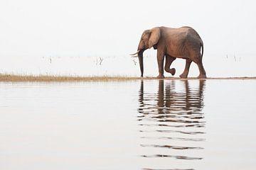 Elefant läuft über die Landzunge von Anja Brouwer Fotografie