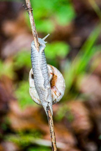 Een slak op een stokje