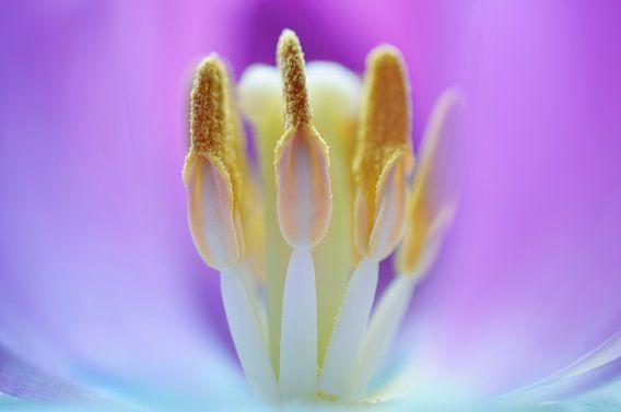 Macro - Inner beauty