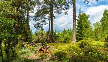 Landschapsfoto Zweden van videomundum