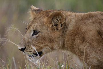 Leeuwen welp von Bart Hendriks