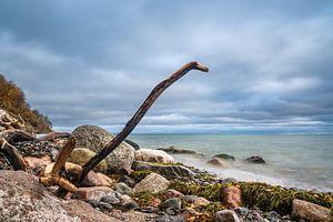 Côte de la mer Baltique sur l'île de Moen au Danemark