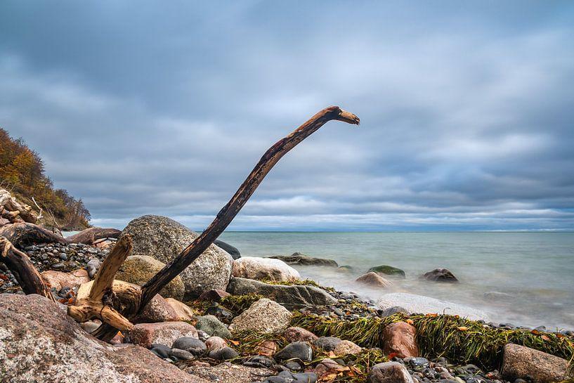Côte de la mer Baltique sur l'île de Moen au Danemark sur Rico Ködder