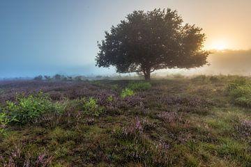 Baum im Nebel von Dennisart Fotografie