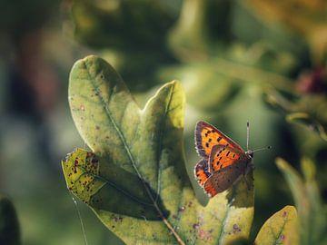 Vlinder van Dolphie's Fotografie