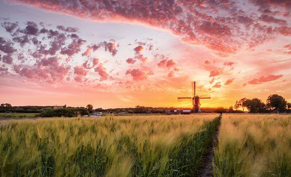 Dutch dreamscape