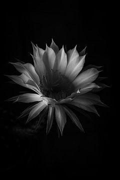 Licht und Schatten von Thilo Wagner