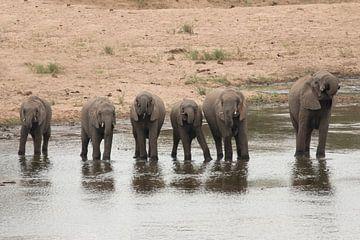 Alle kleine olifantjes op een rij van Riana Kooij