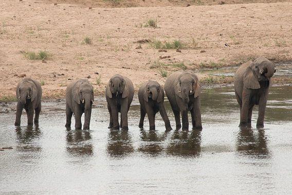 Alle kleine olifantjes op een rij