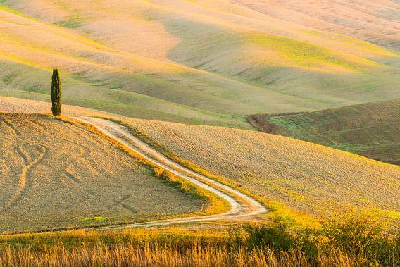 Toscaanse heuvels en cypressen