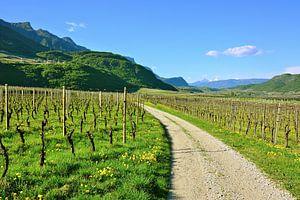 Im Südtiroler Unterland bei Tramin