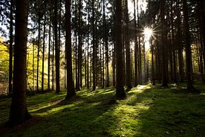 Zie de zon schijnt door de bomen van