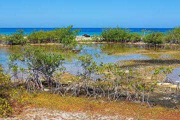 Landschaft mit Mangroven und Meer an der Küste auf der Insel Bonaire von Ben Schonewille
