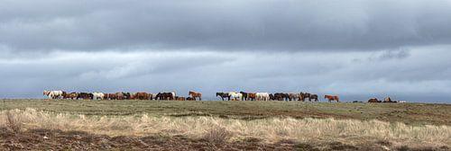 Wild Horse Horizon van BL Photography