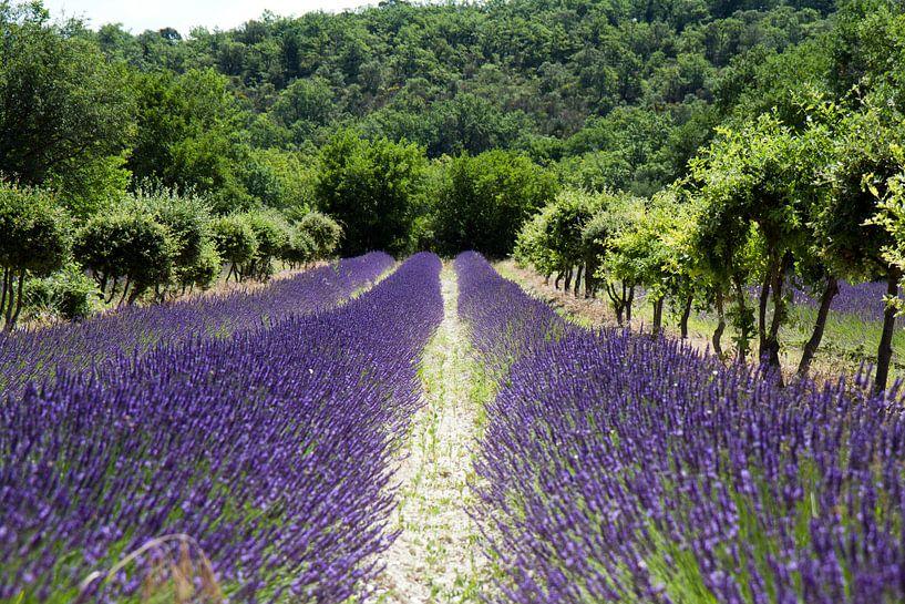 Lavendel van Jolanda van Eek