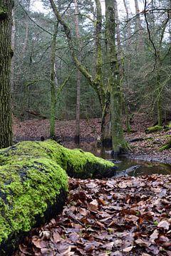 Een dode boom op land en in het water(staand) van Gerard de Zwaan