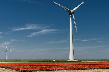 Rote Tulpe and Windmühle von Dirk Duipmans