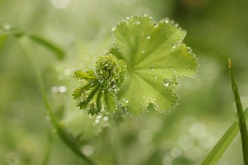 Groene wereld van Arjo van Timmeren